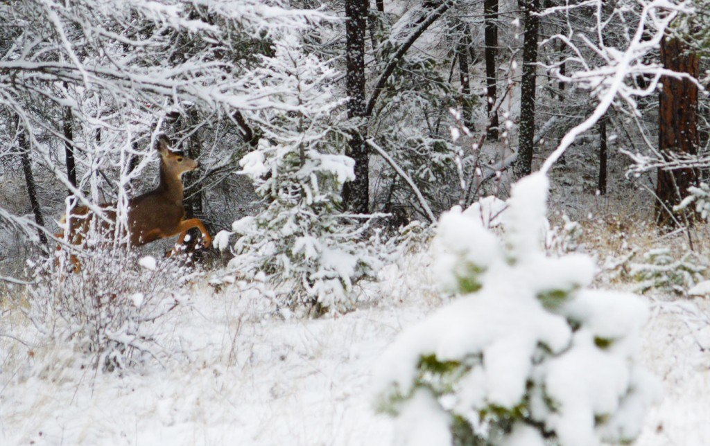 Deer jumping in the forest